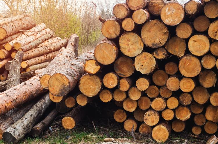 Продаж промислової деревини на онлайн-аукціонах